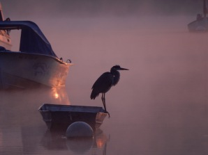 Fall sunrise with a pelican