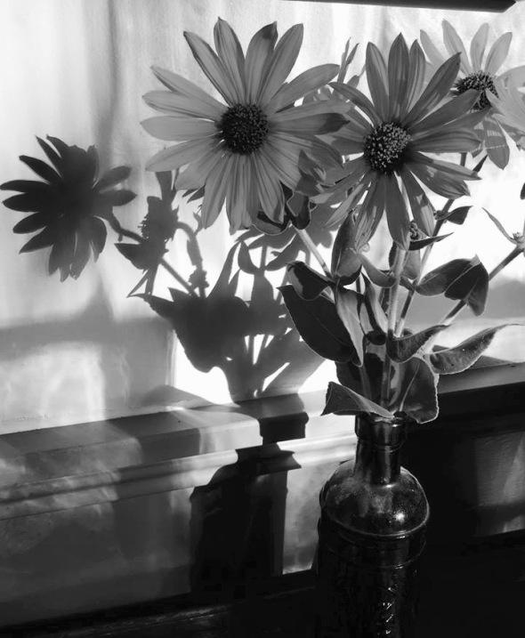 sunflower shadows (1).jpg