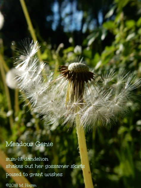 Meadow Genie.jpg