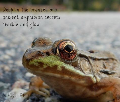 amphibian secrets.jpg