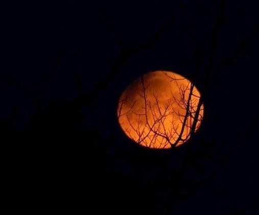 moon tracery (1).jpg