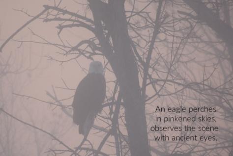 pink sky eagle (1)