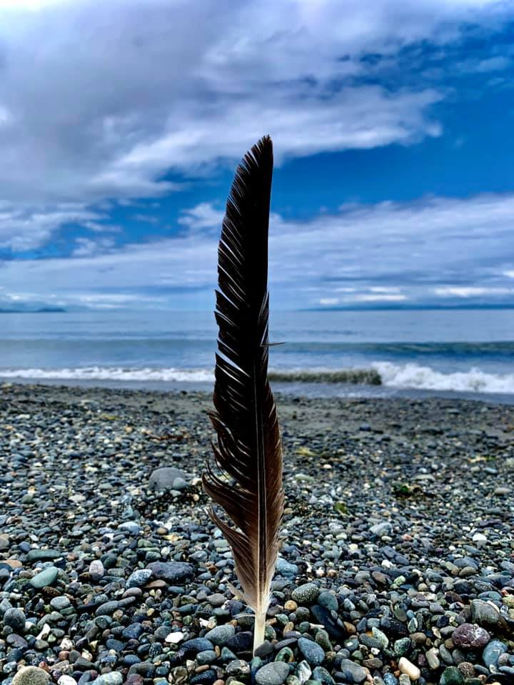 feather-at-sea-by-joanne-duncan.jpg